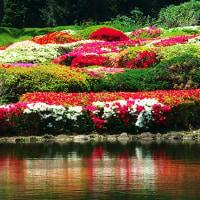 神代植物公園・ツツジ満開、ボタン、藤の花も咲いていました。