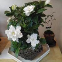 園芸セラピー 寄せ植え 創作盆栽