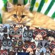 2/25(木)~3/9(水)東急ハンズ渋谷店にて シブヤまぼろし商店街『縁起もの横丁』参加