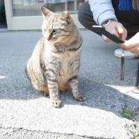 城ヶ島ネコ歩き