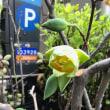 NYのお花屋さん