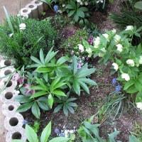私の庭と、頭の中