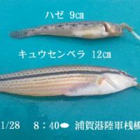 笑転爺の釣行記 11月28日☁ 浦賀港・長瀬岸壁