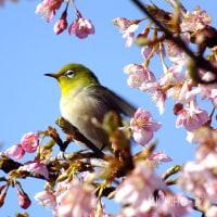 平成29年2月13日(月) に見た花見のオマケ♪