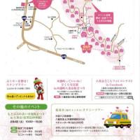第39回沖縄県もとぶ八重岳桜まつり