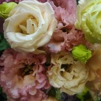 花とニャン・・