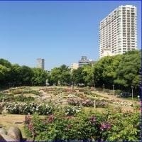うつぼ公園バラ園