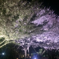 春だね・・・