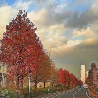 * 地元の秋色が綺麗な風景 *
