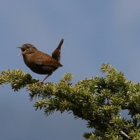 稜線の小鳥達