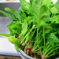 日記(12.5)野菜
