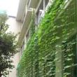 ◎公益財団法人 東京都公園協会の支援を頂き『緑のカーテン』が出来ました。