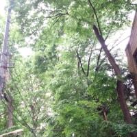 6月10日午前10:15~笹本の議会報告会を開催いたします。