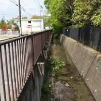 玉川上水に親しむ会・5月例会の下見~柴崎分水上流開渠部分