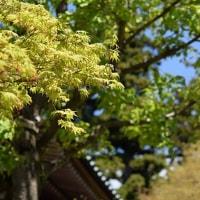 緑眩しい季節