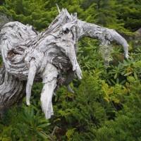 樹木が主役の写真ー8