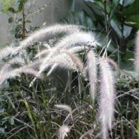 2009-10-25花の美術館01