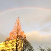 虹を見た。髪を切った。