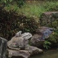 蛙の子は蛙。トンビは鷹は産まん。鷹に近いトンビは育てられるが。(写真は太宰府天満宮中庭)