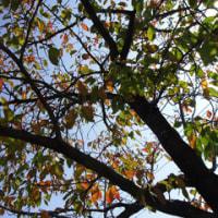 ○○の秋です!