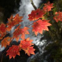 秋空全開でございました。