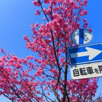 『花模様』 サイクリング道