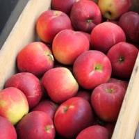 りんごのデザート。