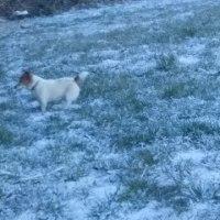 雪がうっすら積もりました