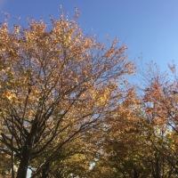 秋だなぁ、、って