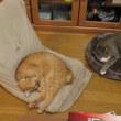 雨の日の猫たち