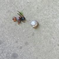 また、蜂が。