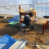 ネギの播種作業開始