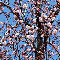 春爛漫・・・
