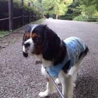 大好きな鎌倉中央公園を満喫!