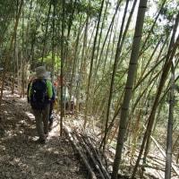 ㉞ 東中倉山~八世以山縦走登山 : 景観