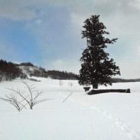 歩くスキーで東の山へ