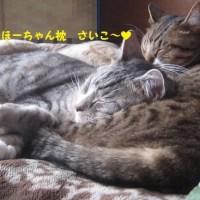 お昼寝中♪