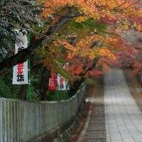 (4K)2016年・紅葉の京都壁紙その14(計11枚)