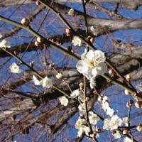 花粉の季節がやってきた!