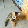 【ペット】子猫物語3