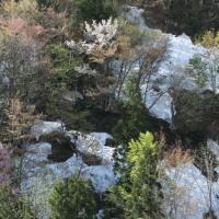 残雪の中の芽吹きと山桜、雪解け
