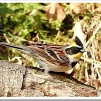 生駒山麓公園の野鳥。