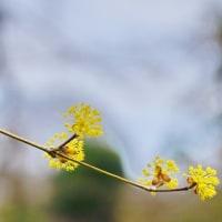 樹木や雑草が春らしく見えてきた武蔵野公園です その3