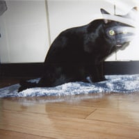 たまには猫の誕生日祭り!④のりまき変(←ここ大事)