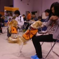 1455  愛知医療学院短期大学様での聴覚障がい・聴導犬・聴導犬実技授業