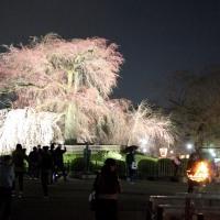 2017年 春の京都ー5
