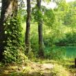 森の碧い休日。