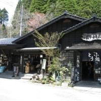 大村のシバザクラに阿蘇『一心行の大桜』と岡本とうふ店 2017年春の車中泊旅