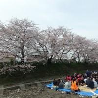入学式は桜、そして雨。