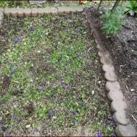 春を迎える庭